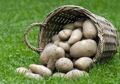 Какое оборудование понадобится для выращивания картофеля (фото: freedigitalphotos.net).