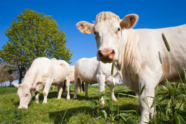 Доля доходов от продажи аграрной продукции должна составлять не менее 70 % (фото: Thierry RYO - Fotolia.com).