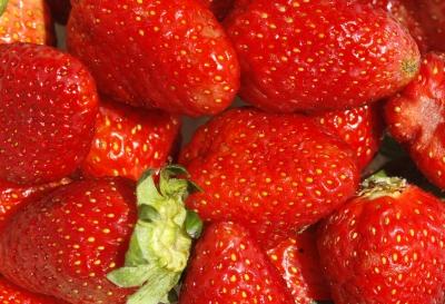 Выращиваем клубнику дома: что нужно делать?(Фото: freedigitalphotos.net).