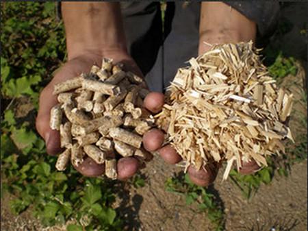 Из чего делают пелеты? (Фото: fenix-nn.com)