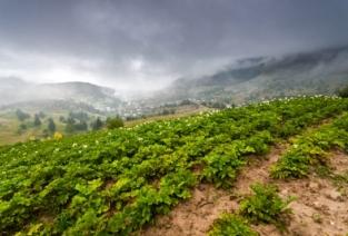 Выращивать картофель может стать довольно прибыльным бизнесом (фото: freedigitalphotos.net).