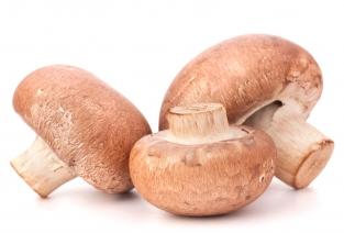 С чего начать грибной бизнес? (фото: