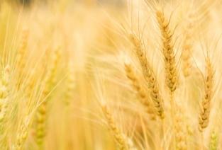 Кто и где может зарегистрировать фермерское хозяйство (фото: freedigitalphotos.net).