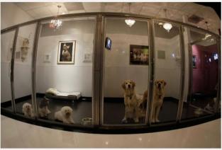 Как долго будут окупаться средства. вложенные в гостиницу для животных? (Фото: http://to-world-travel.ru/)