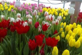 Бизнес на цветах: красиво и прибыльно (фото: moicveti.ru).