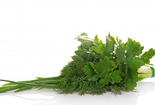 Как построить бизнес на выращивании зелени (фото: laboko - Fotolia.com).
